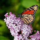 Butterfly & Lilac by Nadine  Birge