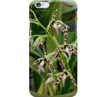 'picture perfect' Orchid 8 iPhone Case/Skin