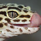 Leopard gecko by Nick Potts
