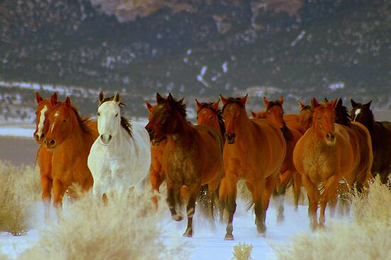 HORSE DRIVE ~CHERRY CREEK NEVADA  by Jeanne  Nations