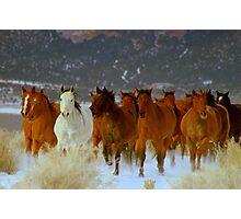 HORSE DRIVE ~CHERRY CREEK NEVADA  Photographic Print