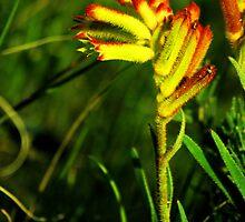 Wildflower Season by Daniel Fitzgerald
