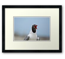Laughing Gull Laughing Framed Print