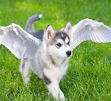 Angel puppy by Mariann Rea