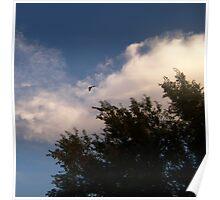 cloud and bird Poster