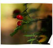 a bokeh of berries in the wood Poster
