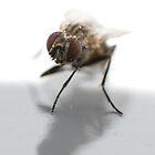 Fly by Nick Potts