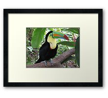 Awesome Toucan