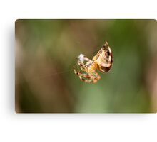 Cotton Candy Spider-Style Canvas Print