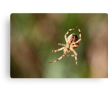 Hanging By Two Threads Canvas Print