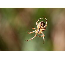 Hanging By Two Threads Photographic Print