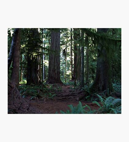Forest Cathedral Photographic Print