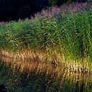 The Reeds by Paul Gitto