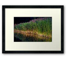 The Reeds Framed Print