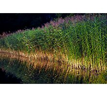 The Reeds Photographic Print