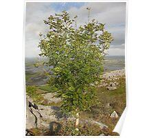 Burren Tree Poster