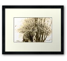 Memories of Kitty ... Framed Print