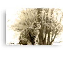 Memories of Kitty ... Canvas Print