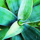 Aloe by Stephanie Stengel | stelonature photography