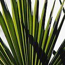 Green Blades by hynek