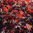 Red Autumn by hynek