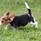 Ears Back for Takeoff by Peggy Berger
