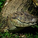 Caiman at the Iguazu Bird Park by photograham