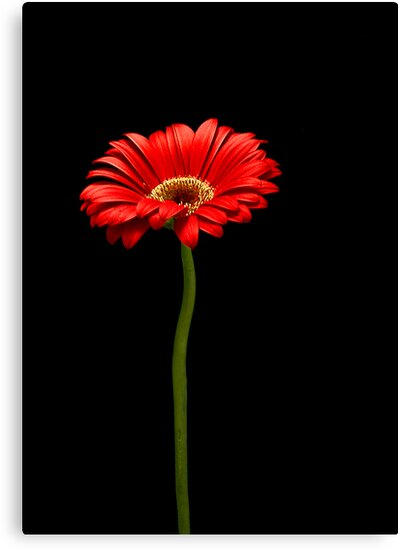 Simply Red by GayeLaunder Photography