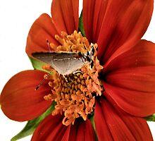 Sweet Nectar by Carla Jensen