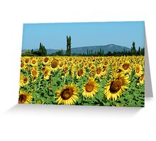 Let the Sunshine in Greeting Card