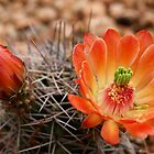 Desert Blooms by worldtripper