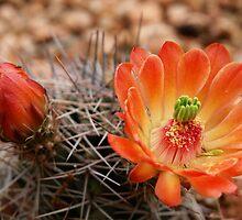Desert Blooms by Marita Sutherlin