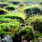 Moss by Sara Johnson