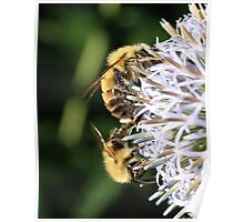 Shimmering Bees Poster