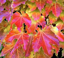 Autumn Leaves on Vines by Dana Roper