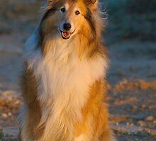 Sun Dog by randmphotos