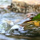 Leaf in Water by Sara Johnson