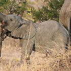 Baby Elephant by Jared Bloom