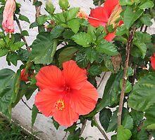blooms by joannadehart