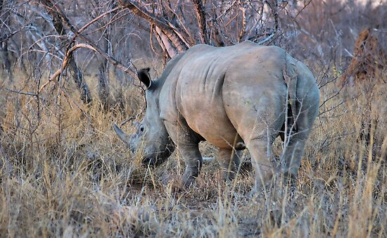 THE RHINOCEROS - Ceratotherium simum by Magaret Meintjes