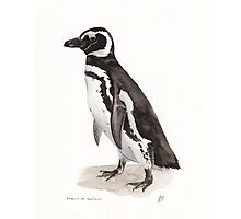 Penguin Watercolor Painting Photographic Print