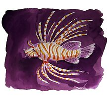 Savannah under the water - The Lion Fish by Daniel Champanhet