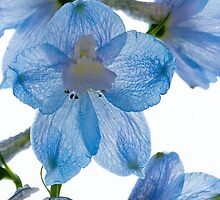 Baby Blue Delphiniums by Renee Hubbard Fine Art Photography