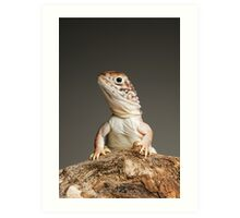 Central Netted Dragon (Ctenophorus nuchalis) Art Print