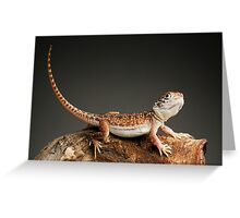 Central Netted Dragon (Ctenophorus nuchalis) Greeting Card