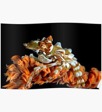 Creeping Crab Poster