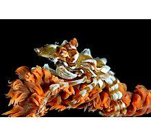 Creeping Crab Photographic Print