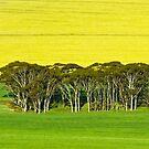 Aussie, Aussie, Aussie - Mount Matilda, Western Australia by Karen Stackpole