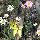 spring wildflowers by Rick Playle
