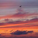 Lucky Bird by Kirstyshots
